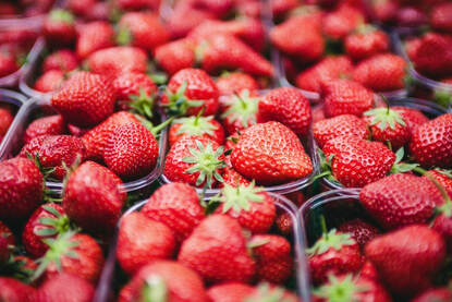 Baskets of strawberries- Families Advocating for Chemical & Toxics Safety